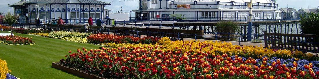 flowers in summer eastbourne seafront by alex askaroff